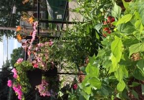 Jardin 2016